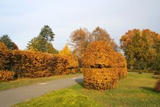 Free Beautiful Trimmed For The Bushes Autumn Stock Photography - 4036572
