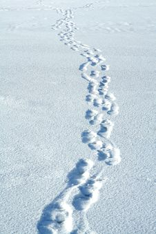 Free Traces On Snow Stock Photos - 4037293