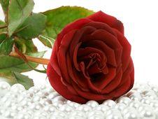 Free Rose On Beads Stock Photo - 4037670