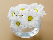Free A Bouquet Of Daisies Royalty Free Stock Photo - 4037695