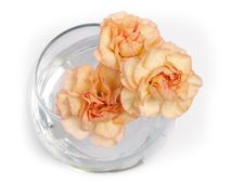 A Bouquet Of Carnations Royalty Free Stock Photo