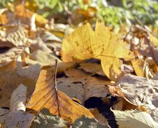 Free Autumn Leaf On The Fallen Foliage Royalty Free Stock Images - 4037719