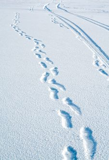 Free Traces On Snow Royalty Free Stock Photography - 4038017