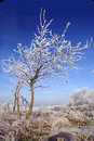 Free White Frosted Tree Royalty Free Stock Images - 4046619