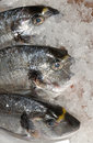 Free Bream At Fishmonger Stock Image - 4049381