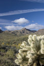 Free Cholla Cactus Stock Images - 4049874