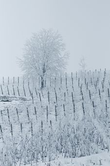 Free Winter Landscape Stock Photography - 4040092