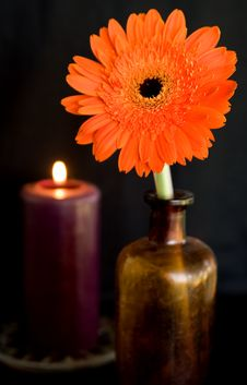 Free Berber Daisy And Candle Stock Photos - 4040543