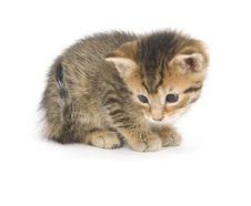 Free Shy Tabby Kitten Stock Image - 4040911