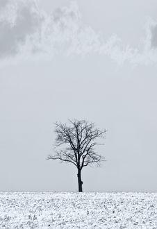 Free Single Tree Stock Images - 4042654