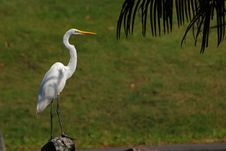 Little Egret Standing On The Rock Stock Images