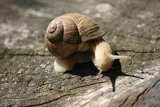 Free Snail Stock Image - 4043371