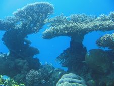 Free Corals In The Red Sea Royalty Free Stock Images - 4043509