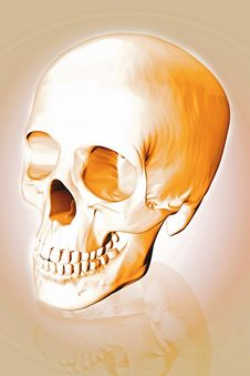Free Human Scull Stock Image - 4043601