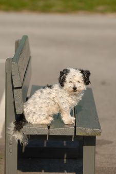 Free Dog On A Bench Royalty Free Stock Photos - 4043858