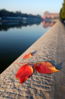 Free Leaves Of Autumn Royalty Free Stock Image - 4046076