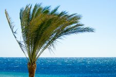 Free Tropical Palmtree Royalty Free Stock Images - 4046319