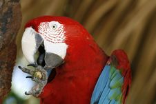 Free Macaw Up Close Royalty Free Stock Photo - 4046625