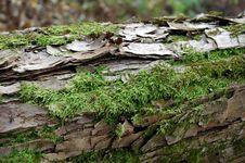 Free Lichen Stock Image - 4047071