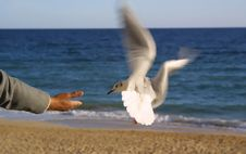Giving Bread To Seagull Stock Photography