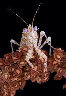 Free Spiny Mantis Stare Stock Photo - 4047660