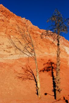 Free Red Mountain With A Thin Tree Royalty Free Stock Photography - 4048057