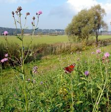 The Butterfly,flowers And Bavarian Landscape Stock Image