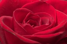 Free Red Rose Close Stock Photography - 4048522