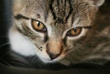 Free Cat Royalty Free Stock Photo - 4048675