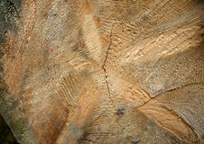 Free Stump Close-up Royalty Free Stock Photography - 4049047