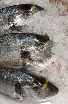 Bream At Fishmonger Stock Image
