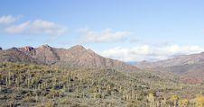 Free Saguaro Cactus In Canyon Royalty Free Stock Image - 4049976