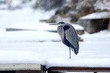 Heron On A Dock. Royalty Free Stock Photos