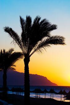 Free Palmtree Sunset Stock Photos - 4050893