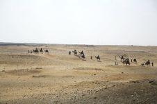 Free Camels Caravan Royalty Free Stock Photos - 4051368