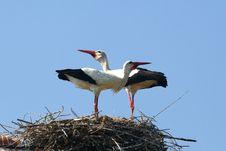 Free Stork Nest Royalty Free Stock Photo - 4051825