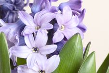 Free Detail Of Hyacinth Stock Images - 4051904
