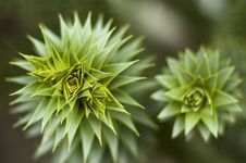 Free Prickly Plants Stock Photo - 4052030