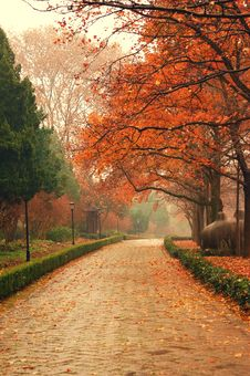 Maple Leaves In NanJing China Stock Photos