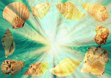 Free Sea Shells Stock Photos - 4052623
