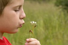 Free Boy Blowing Thistle Stock Photo - 4053160