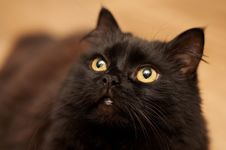 Black Cat Looking Up Stock Photo