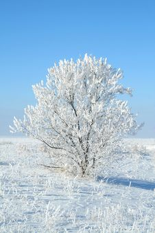 Free Alone Frozen Tree Stock Photos - 4055063