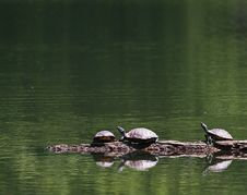 Free Turtles Reflected Royalty Free Stock Photography - 4055297