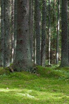 Free Mystery Forest Royalty Free Stock Photography - 4055717