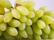 Free Cluster Of Grapes Stock Images - 4055774