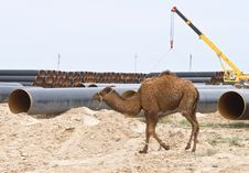 Free Camel On Industry Background Royalty Free Stock Photos - 4056088