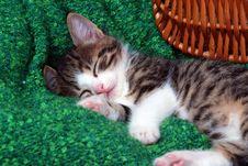 Free Kitten Taking A Nap Royalty Free Stock Photo - 4056235