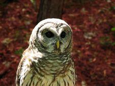 Owl Of Love Royalty Free Stock Photos