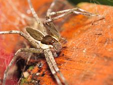 Free Spider Stock Photography - 4057372